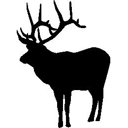 Олень Вапити