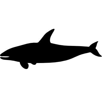 Косатка