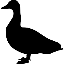 Дикая утка (кряква)