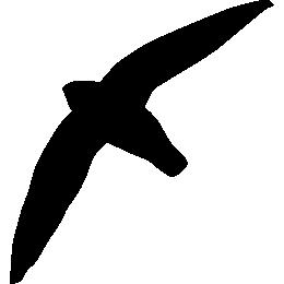 Иглохвостый стриж