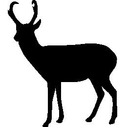 Вилорог