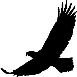 Краснохвостый ястреб